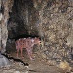 Jaskinia Nietoperzowa (Jaskinia Księża, Jaskinia Biała, Jaskinia Jerzmanowicka): 2018-08-20